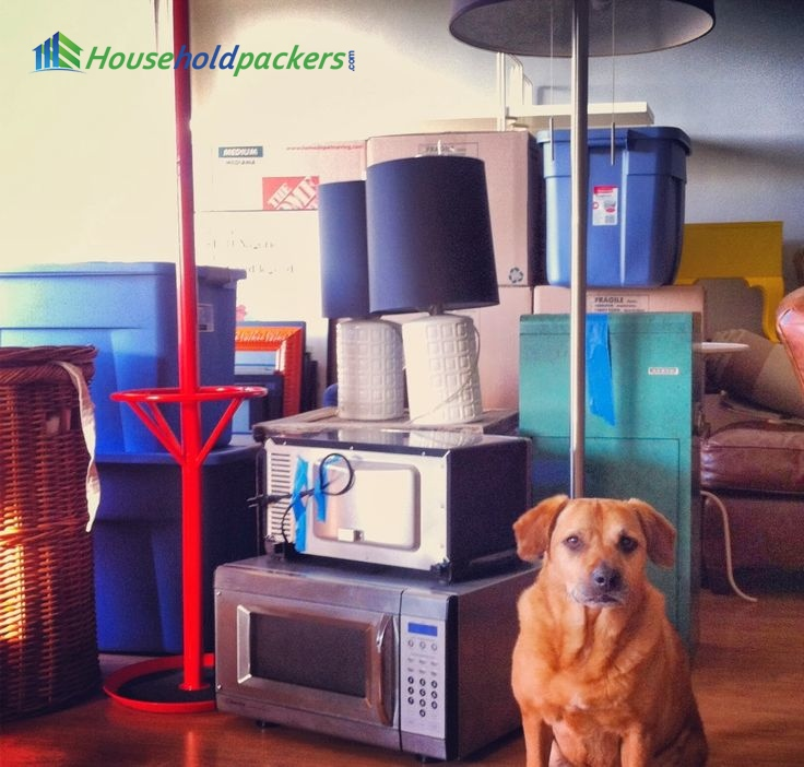 Moving With Pets? Make It Easier By Following The Instructions